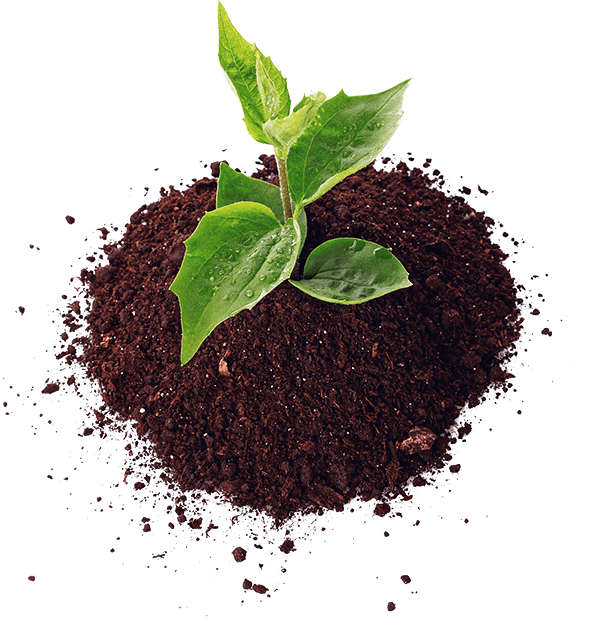 plant in dirt