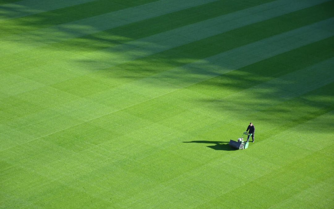 Tips for a healthy lawn